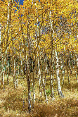 Photograph - Colorado Gold by Tony Baca