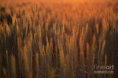 Photograph - Colorado Grasslands by Jim Garrison
