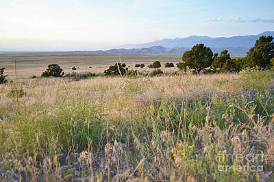 Photograph - Colorado Great Sand Dunes Wildflower Field Landscape by Andrea Hazel Ihlefeld