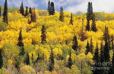 Photograph - Colorado In Autumn by James Steinberg