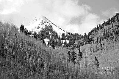 Photograph - Colorado Mountain Forest Landscape by Andrea Hazel Ihlefeld