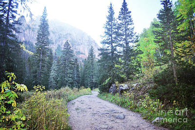Photograph - Colorado Mountain Forest Nature Trail Landscape by Andrea Hazel Ihlefeld
