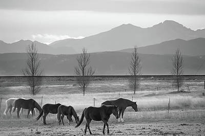 Photograph - Colorado Mountain Horses - Black And White by Gregory Ballos