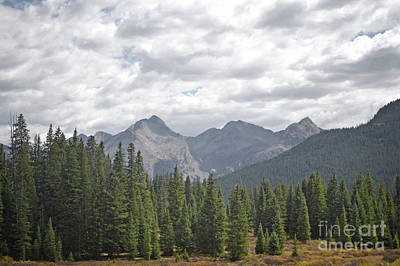 Photograph - Colorado Mountain Pine Tree Forest Landscape by Andrea Hazel Ihlefeld