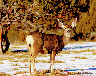 Photograph - Colorado Mule Deer Doe by Dale E Jackson