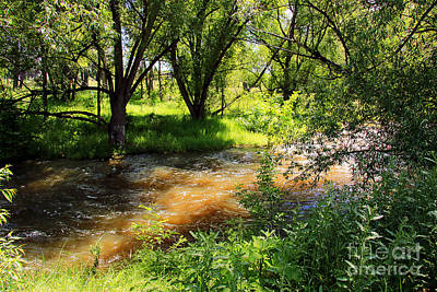Photograph - Colorado Nature by Afrodita Ellerman