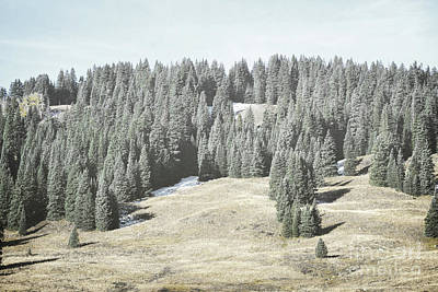 Photograph - Colorado Pine Tree Hill by Andrea Hazel Ihlefeld