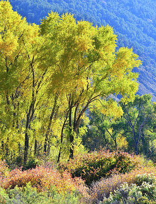 Photograph - Colorado River Fall Colors by Ray Mathis