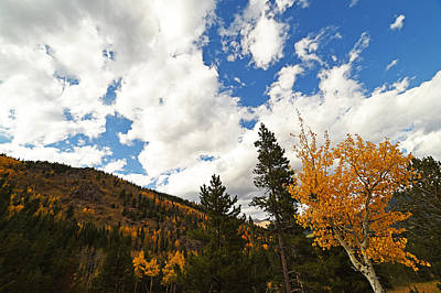 Photograph - Colorado Rockies National Park Fall Foliage Aspen by Toby McGuire