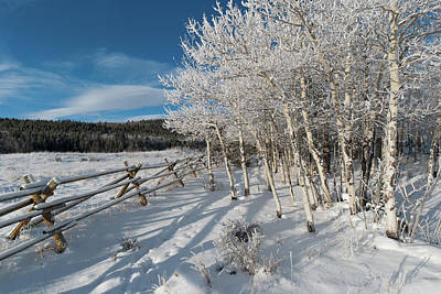 Photograph - Colorado Snow Covered Aspen Landscape by Cascade Colors