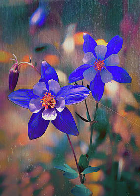 Photograph - Columbine - Colorado State Flower by OLena Art Brand
