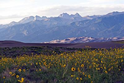 Colorado Style Landscape Sunflowers On The Sangre De Cristos Print by Scotts Scapes