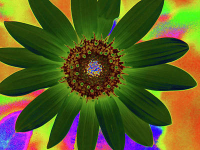 Photograph - Colorado Sunflower - Photopower 3482 by Pamela Critchlow