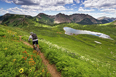 Photograph - Colorado Trail 2 by Whit Richardson