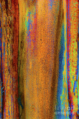 Photograph - Colorado Tree Bark by Susan Warren
