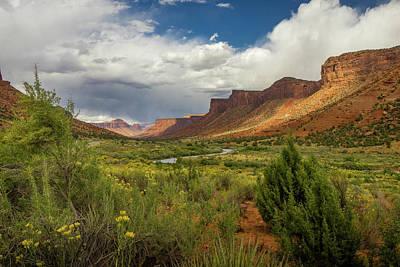 Photograph - Colorado Uncompahgre National Forest by Constance Reid
