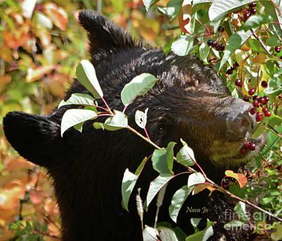 Photograph - Colorado Wild Black Bear by Nava Thompson