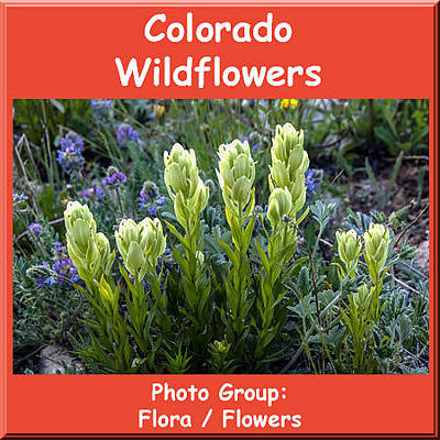 Photograph - Colorado Wildflowers by NaturesPix