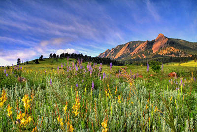 Blue Sky Photograph - Colorado Wildflowers by Scott Mahon