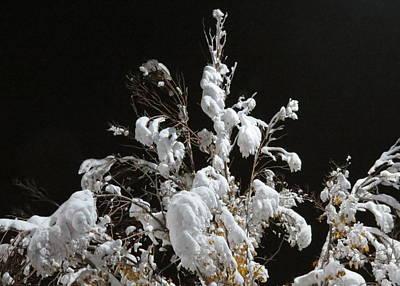 Colorado Winter 4 Art Print