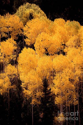 Photograph - Colorado's Best by The Forests Edge Photography - Diane Sandoval