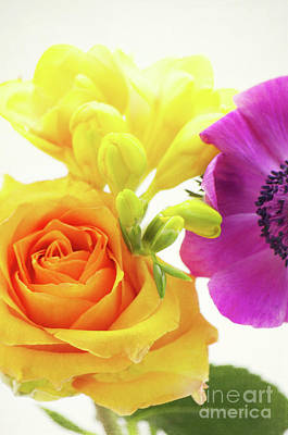 Violett Photograph - Colored Flowers by Angela Doelling AD DESIGN Photo and PhotoArt