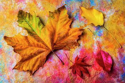 Photograph - Colored Autumn Leaf Still Life by Garry Gay