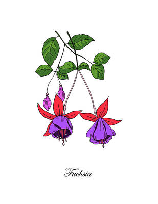 Mixed Media - Colored Fuchsia. Botanical by Masha Batkova