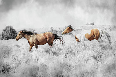 Photograph - Colored Horses by Steve McKinzie