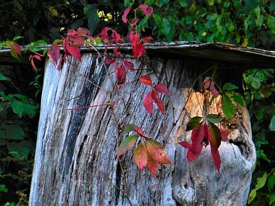 Photograph - Colored Leaves Against Tree Trunk by Jacqueline Madden