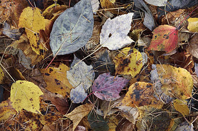 Colored Leaves Original by IGUCHI Yasunori