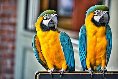 Parakeet Photograph - Colored Parakeet by Peter Dang
