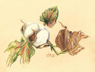 Drawing - Colored Pencil Cotton Plant by Jacki Kellum