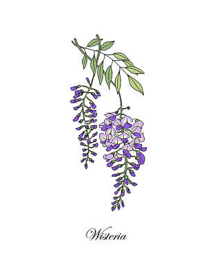 Mixed Media - Colored Wisteria. Botanical by Masha Batkova