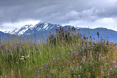 Photograph - Colorful Alaska Field by Gloria Anderson