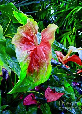 Photograph - Colorful Anthurium by Craig Wood