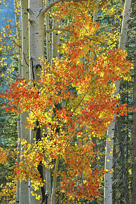 Photograph - Colorful Aspen Along Million Dollar Highway by Ray Mathis