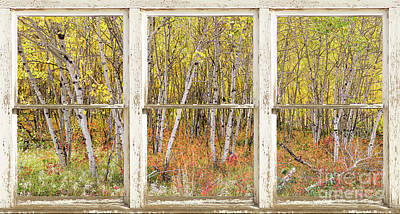 Colorful Aspen Tree Forest White Rustic Panorama Window View Art Print by James BO Insogna