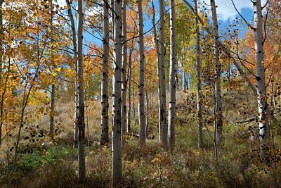 Photograph - Colorful Autumn Aspen Forest by Cascade Colors