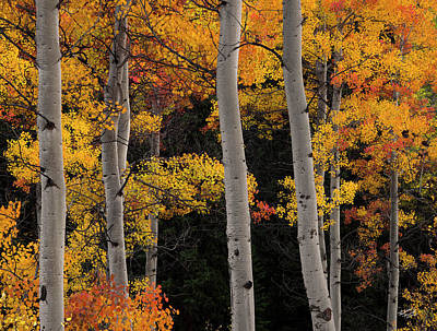 Photograph - Colorful Autumn Forest by Leland D Howard