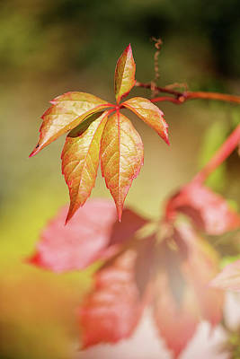 Photograph - Colorful Autumn by Cindy Grundsten