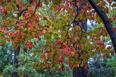 Photograph - Colorful Autumn Leaves by Jane Luxton
