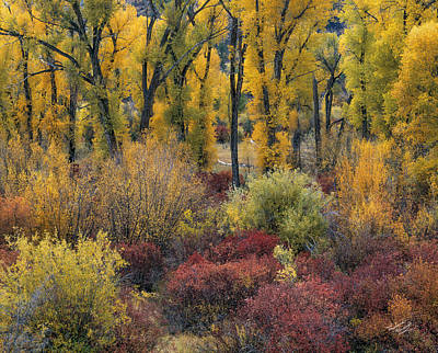 Beautiful Nature Photograph - Colorful Autumn by Leland D Howard