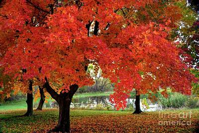 Photograph - Colorful Autumn Maples by Jean Hutchison