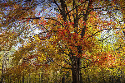 Photograph - Colorful Autumn Tree In Southwest Michigan By Gun Lake by Randall Nyhof