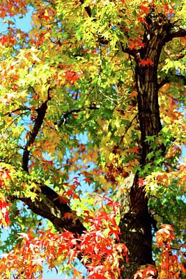 Photograph - Colorful Autumn Tree Vertical by Matt Harang
