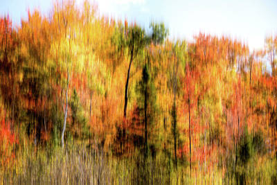 Photograph - Colorful Autumn Trees by Onyonet  Photo Studios