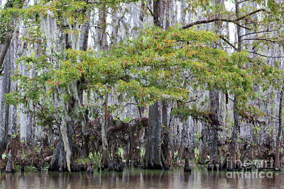 Photograph - Colorful Bayou by Carol Groenen