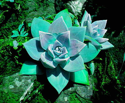 Digital Art - Colorful Beach Succulents by Larry and Charlotte Bacon
