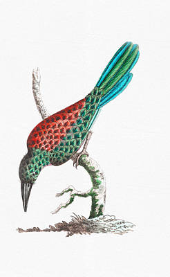 Drawing - Colorful Bird Art - Great Jamacar Red Blue And Green Birds Wall Art by Wall Art Prints